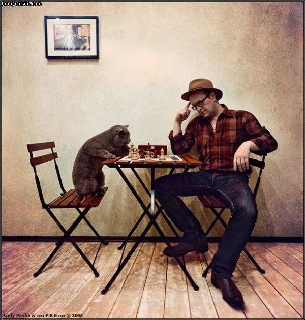 Chess_Cat682